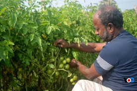 কুমিল্লায় সবজি চাষে ব্যস্ত কৃষকদের মন ভালো নেই